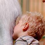 Лечебно-оздоровительная верховая езда для детей и взрослых