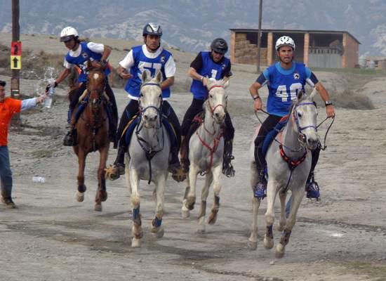 21 сентября приглашаем зрителей и участников на соревнования по дистанционным конным пробегам