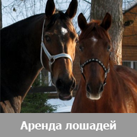 Аренда лошадей и пони