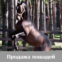 Продажа лошадей и пони